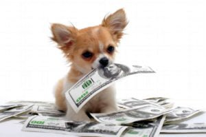happy-oodles-are-you-really-ready-to-get-a-dog-expenses-fl