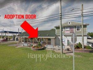 happy-oodles-bellas-life-day-1-front-green-door-larger-view-fl