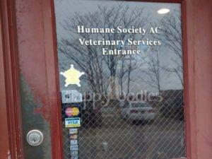 happy-oodles-bellas-life-day-1-humane-society-vet-clinic-v2-fl