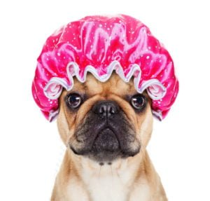 happy-oodles-which-dog-is-right-for-you-grooming-requirements-fl