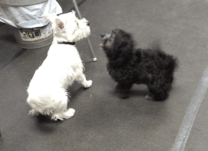 Puppy Socialization - new friends