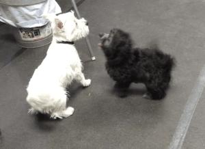 Puppy Socialization - new friends