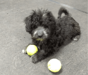 End of Puppy Socialization Classes