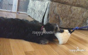 happy-oodles-reviews-pole-and-chase-toys-4-fl