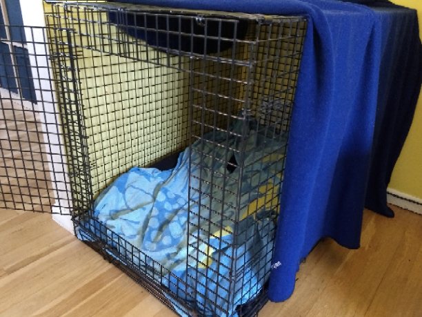 Crate training a puppy - Open crate with blue banket on top.