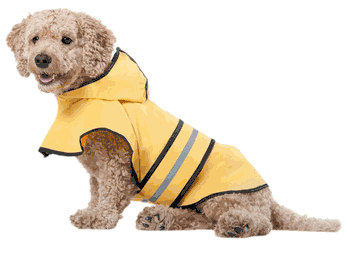 Rainy Day Raincoat for Dogs