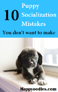 Puppy Socialization Mistakes