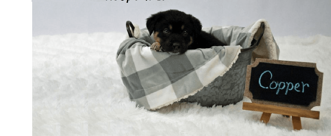 Adopt a Dog: How to Get the Dog You Want