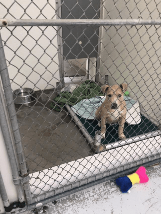 Dog Adoption - Where to Find Your Perfect Pup