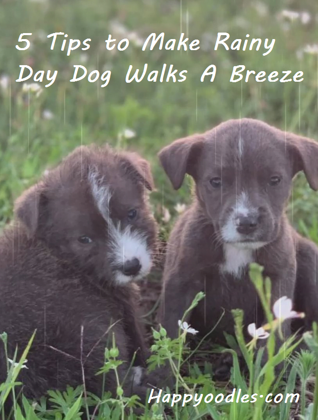 5 Tips to Make Rainy Day Dog Walks a Breeze
