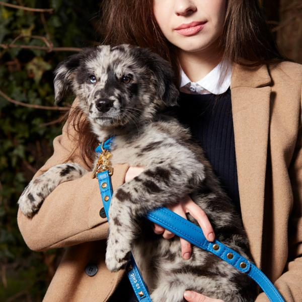Woman in tan blazer holding a black and white marbled puppy with a blue leash.   Leash from Pet so chic website.
