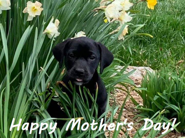 Ways to celebration Mother's Day for dog moms.
