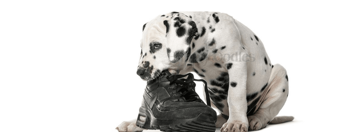 How to Stop Your Puppy's Destructive Chewing