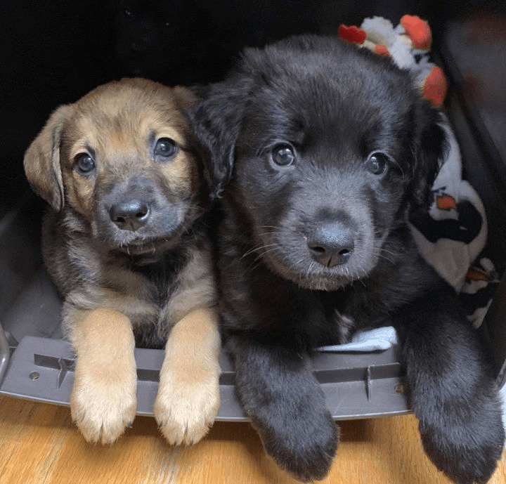 5 Safe and Easy Ways to Socialize your Puppy