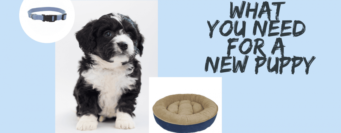 What You Need for a New Puppy?