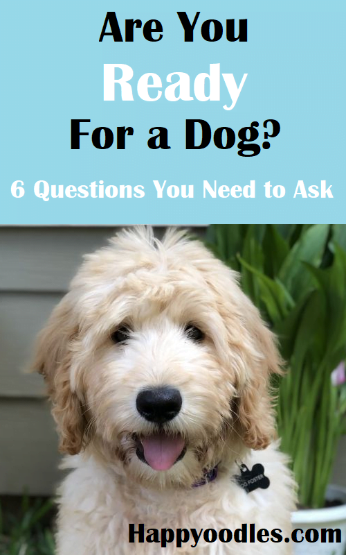 Are you ready for a dog? 6 questions you need to ask yourself.