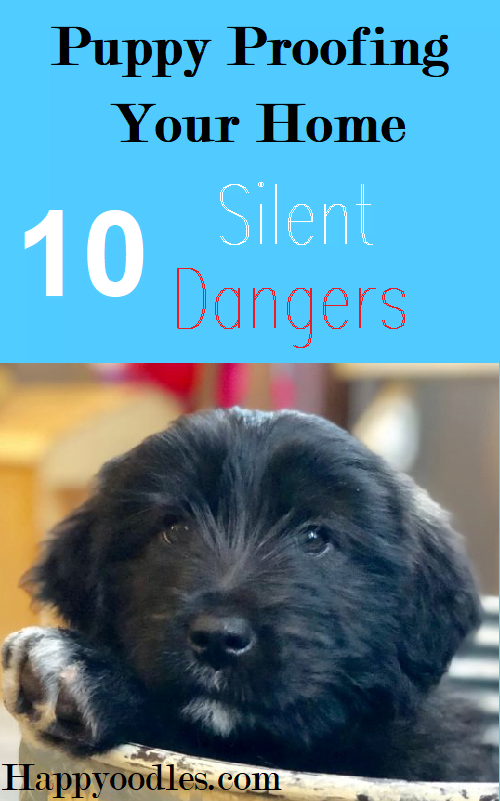 "Blue backgroud with text ""Puppy Proofing Your home - 10 Silent Dangers."" on top of picture.  Bottom of picture consists of a black puppies head with their pwa sticking out of a basket."