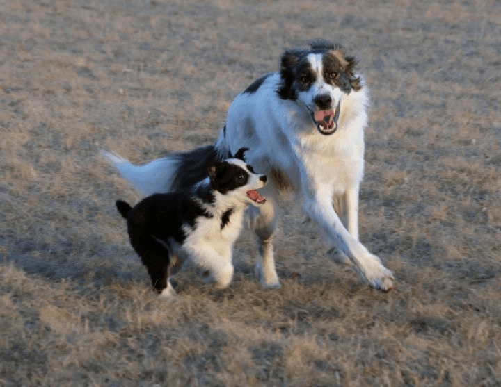 The Dog Park: Concerns and Safety Tips Updated July 2019