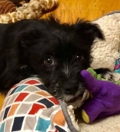 How to Crate Train a Puppy - 10 Mistakes to Avoid. Black puppy on floor with toys