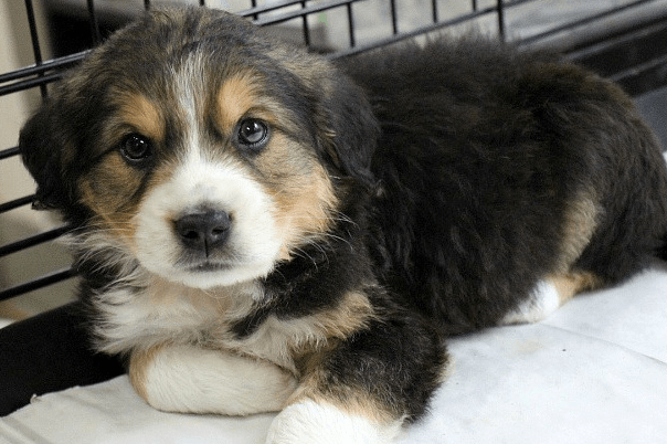 How to Crate Train a Puppy - 10 Mistakes to Avoid. Puppy in crate