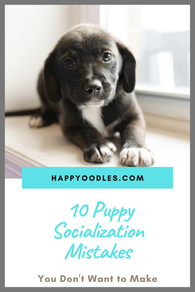 10 Puppy Socialization Mistakes