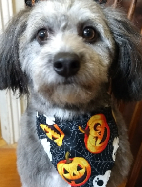 20 Hilarious Halloween Costumes for Dogs - Dog with halloween bandana.