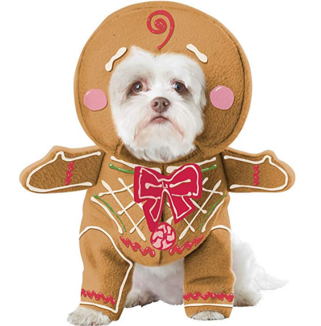 Dog dressed as gingerbread man