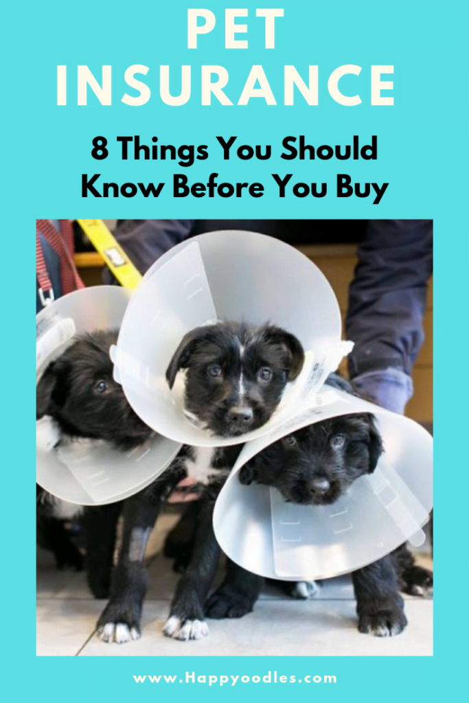 Pet Insurance - 8 Things You Should Know Before you buy pin image.  Three dogs with cones on their heads