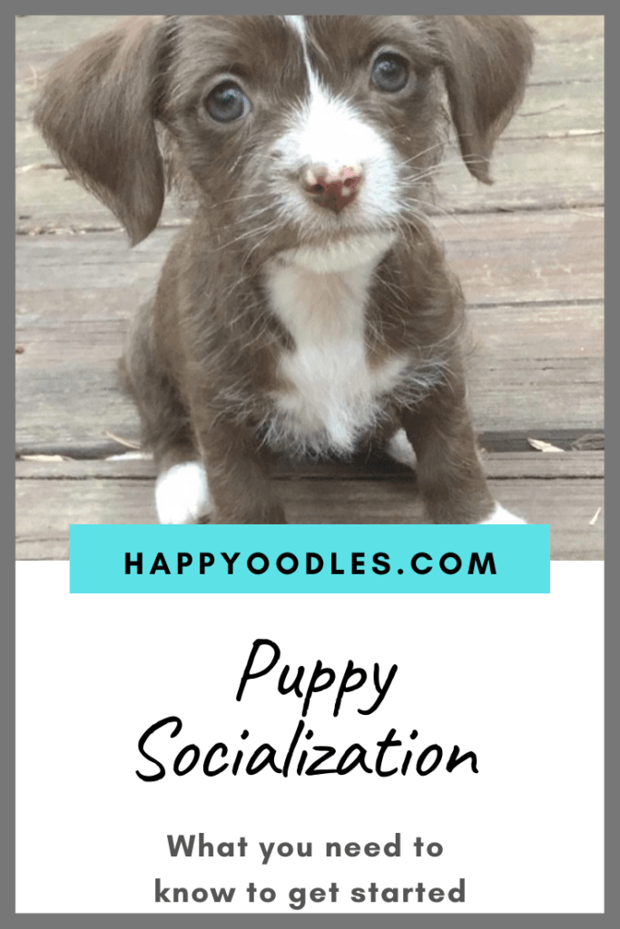 Puppy Socialization Basics - Gray puppy