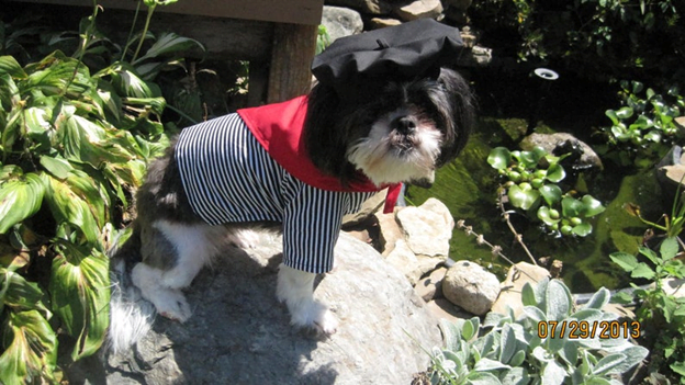 Frenchman Halloween costume for dogs