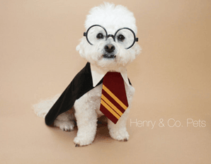 This custom made Harry Potter inspired dog costume
