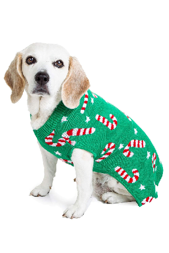 Light green sweater with candy canes on mixed breed dog