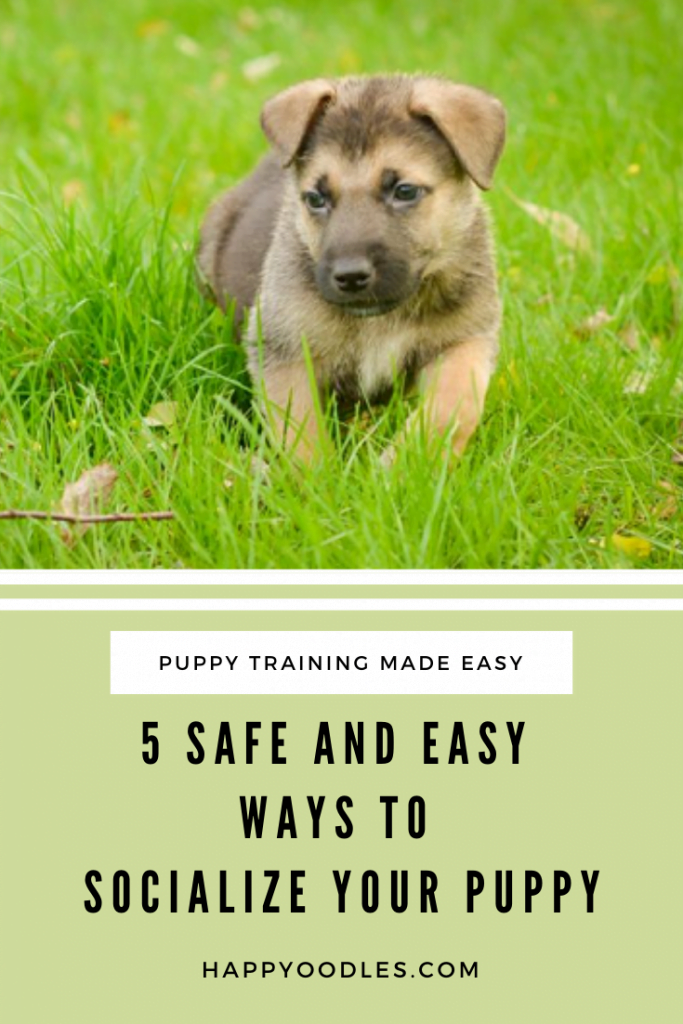 Puppy Socialization Posts - 5 safe and Easy Ways to Socialize a Puppy