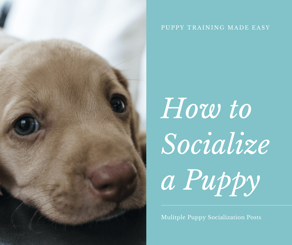 Puppy Socialization posts - How to Socialize a Puppy