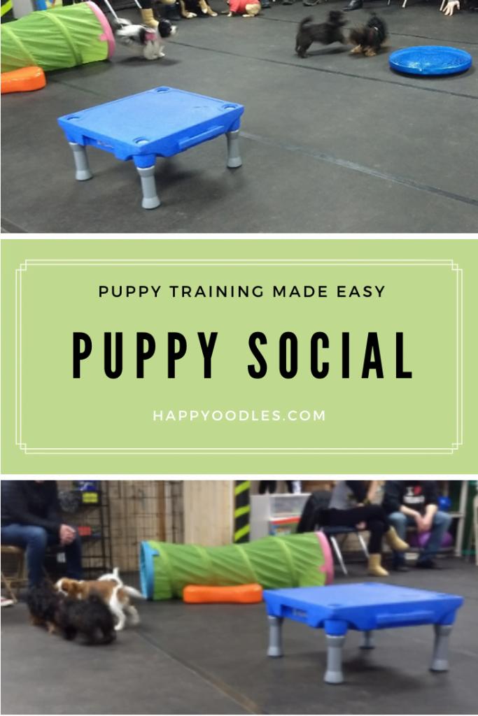 Puppy Social