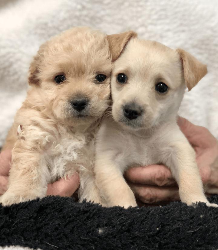 Puppy Potty Training Mistakes