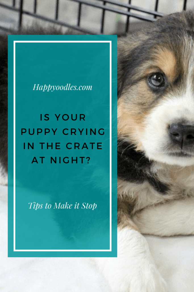 Puppy Crying in the Crate at Night? How to Make it Stop - Pin graphic