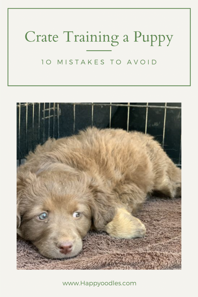 How to crate train a puppy - 10 mistakes to avoid