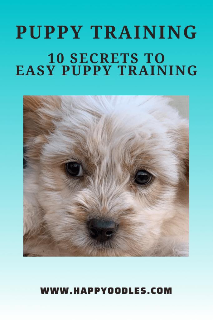 Puppy Training: 10 Secrets to Easy Puppy Training