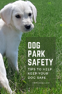 Dog Park Safety: Concerns and Tips