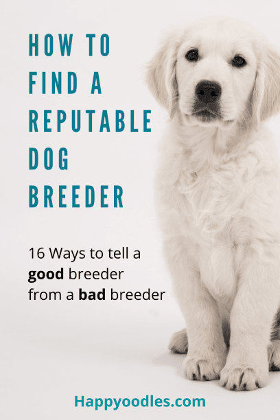 How to Find a Reputable Dog Breeder Pin - White dog sitting